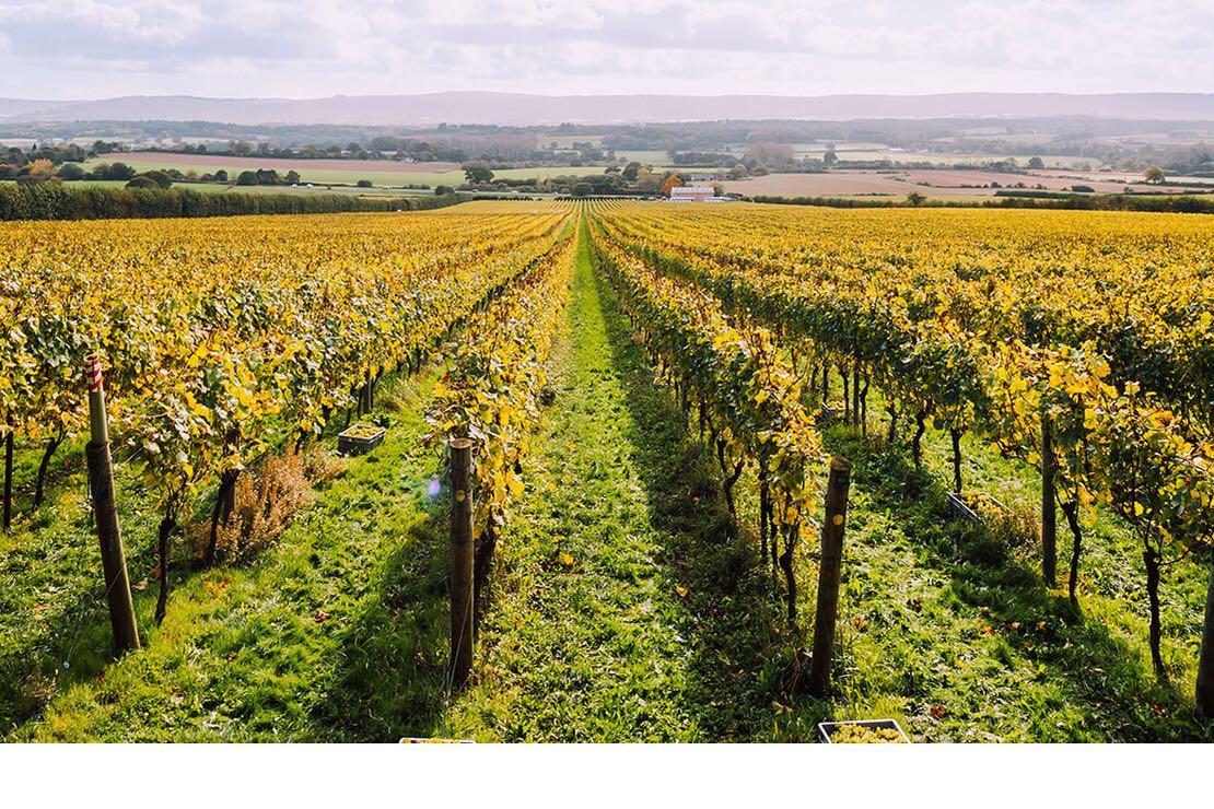 Sparkling Wine England