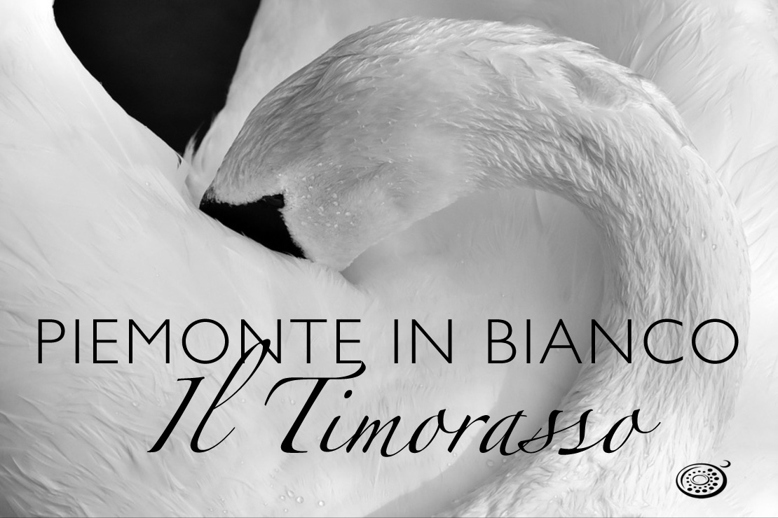 Piemonte in bianco: il Timorasso