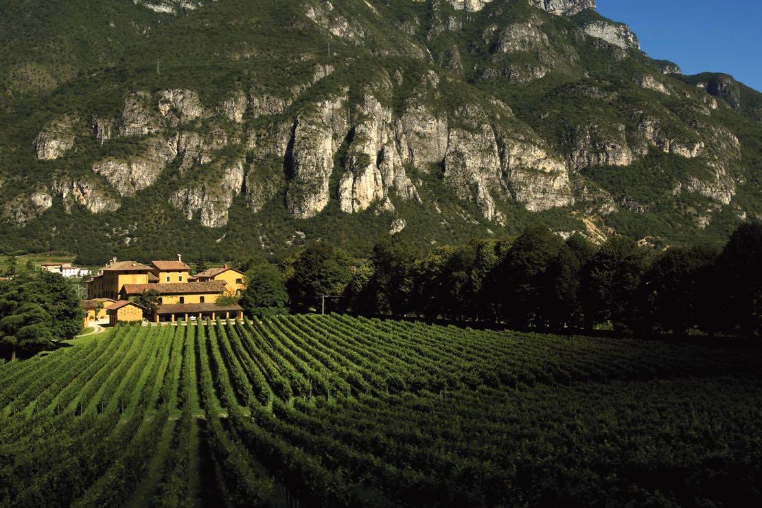 I vini della Tenuta San Leonardo 1724
