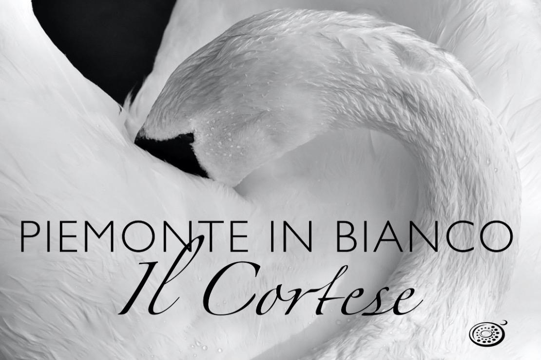 Piemonte in bianco. Il Cortese
