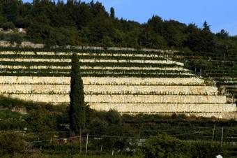 Amarone Capitel Monte Olmi