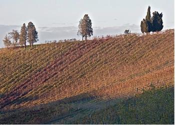 Vigneti in autunno della Valle del Riesling