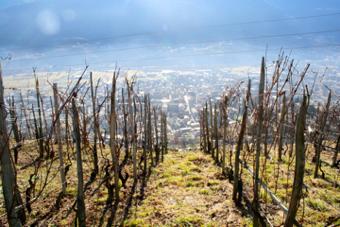 Valtellina - Vista su Sondrio dai vigneti del Grumello, di A. Franceschini