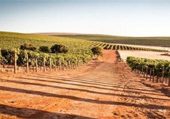 Sudafrica - Vigne azienda Diemers