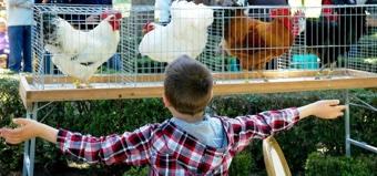 Vivere con gli animali - Fondazione Bussolera Branca